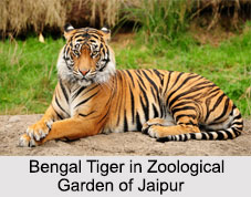 Zoological Garden, Jaipur, Indian National Parks