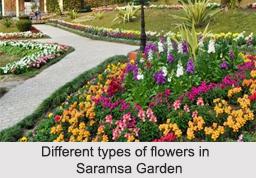 Saramsa Garden, Sikkim