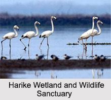Wildlife Sanctuaries in Punjab, Indian Wildlife Sanctuaries