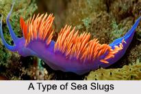 Slugs, Gastropod Mollusc, Geography of India
