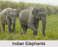 Indian Animals