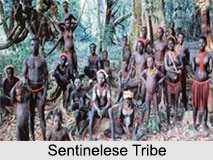 Sentinelese Tribe, Andaman and Nicobar, Indian Tribal People