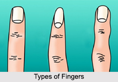Types of Fingers, Palmistry