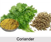 Coriander, Types of Spice