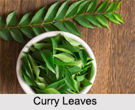 Curry Leaves, Types of Spices