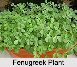 Fenugreek Seeds, Types of Spice