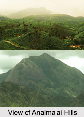 Anaimalai Hills, Coimbatore, Tamil Nadu