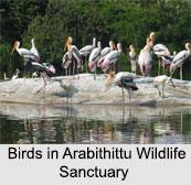 Arabithittu Wildlife Sanctuary, Mysore, Karnataka