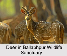 Ballabhpur Wildlife Sanctuary, Birbhum, West Bengal