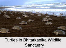 Bhitarkanika Wildlife Sanctuary, Kendrapara, Odisha