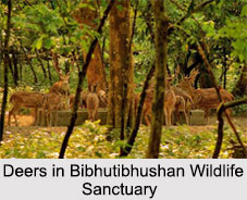 Bibhutibhushan Wildlife Sanctuary, West Bengal