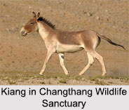 Changthang Wildlife Sanctuary, Ladakh
