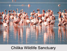 Chilika Wildlife Sanctuary, Odisha
