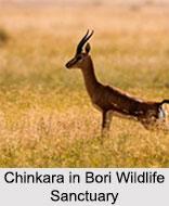 Bori Wildlife Sanctuary, Madhya Pradesh