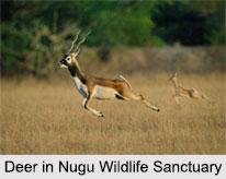 Nugu Wildlife Sanctuary, Mysore District, Karnataka