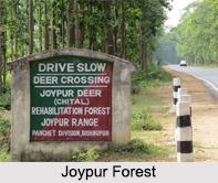 Joypur Forest, West Bengal