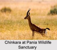 Pania Wildlife Sanctuary, Gujarat