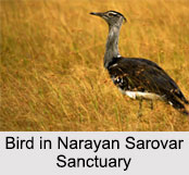 Narayan Sarovar Chinkara Sanctuary, Gujarat