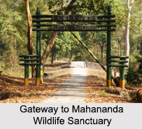 Mahananda Wildlife Sanctuary, Darjeeling, West Bengal
