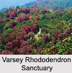 Varsey Rhododendron Sanctuary, Sikkim