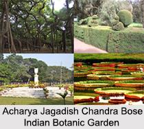 Acharya Jagadish Chandra Bose Indian Botanic Garden, Kolkata