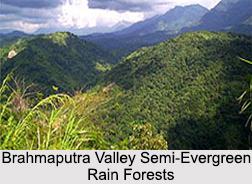 Brahmaputra Valley Semi-Evergreen Rain Forests in India