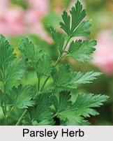 Parsley, Indian Herb