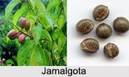 Use of Jamalgota as Medicines, Classification of Medicine