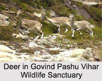 Govind Pashu Vihar Wildlife Sanctuary, Uttarkashi, Uttarakhand