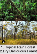 Types of Forest in India