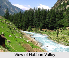 Habban Valley, Himachal Pradesh