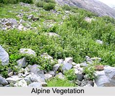 Natural Vegetation in India