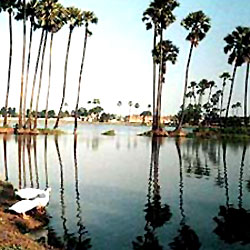 Gaggara's Lotus Lake in Champanagar