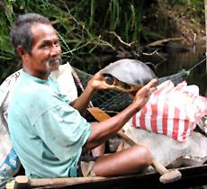 Malayan Tribe