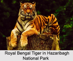 Hazaribagh National Park, Jharkhand
