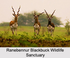 Wildlife Sanctuaries of Karnataka