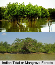 Indian Tidal or Mangrove Forests
