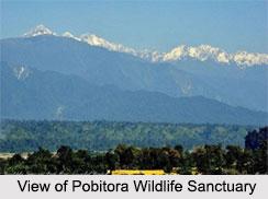 Pobitora Wildlife Sanctuary, Assam