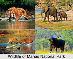Manas National Park, Assam