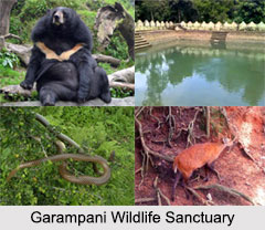 Garampani Wildlife Sanctuary, Assam