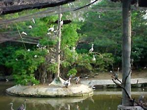 Point Calimere Wildlife Sanctuary in Tamil Nadu