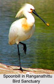 Bird Sanctuaries in Karnataka