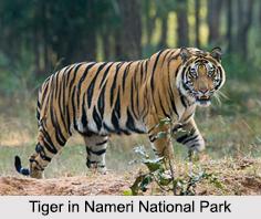Nameri National Park, Sonitpur District, Assam