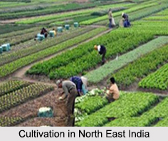 Cultivation in North East India, Indian Vegetation