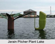Jarain Pitcher Plant Lake, Meghalaya
