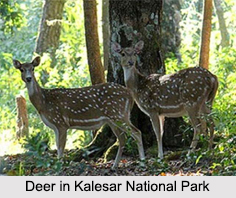 Kalesar National Park, Yamunanagar District, Haryana