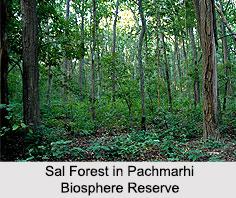 Pachmarhi Biosphere Reserve, Madhya Pradesh