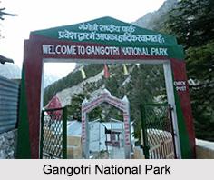 Gangotri National Park
