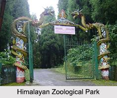 Himalayan Zoological Park, Sikkim