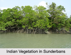 Indian Vegetation